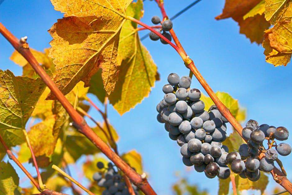 DiVinOttobre 2017 Eventi Vino Trentino vinotube